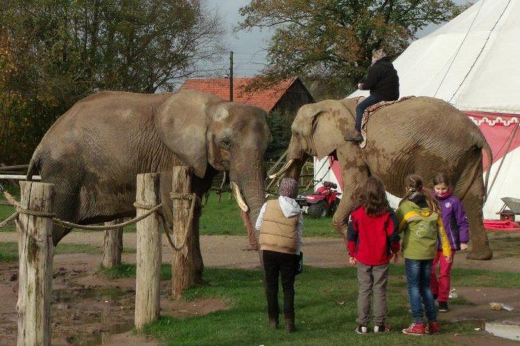 Elefantendorf Platschow